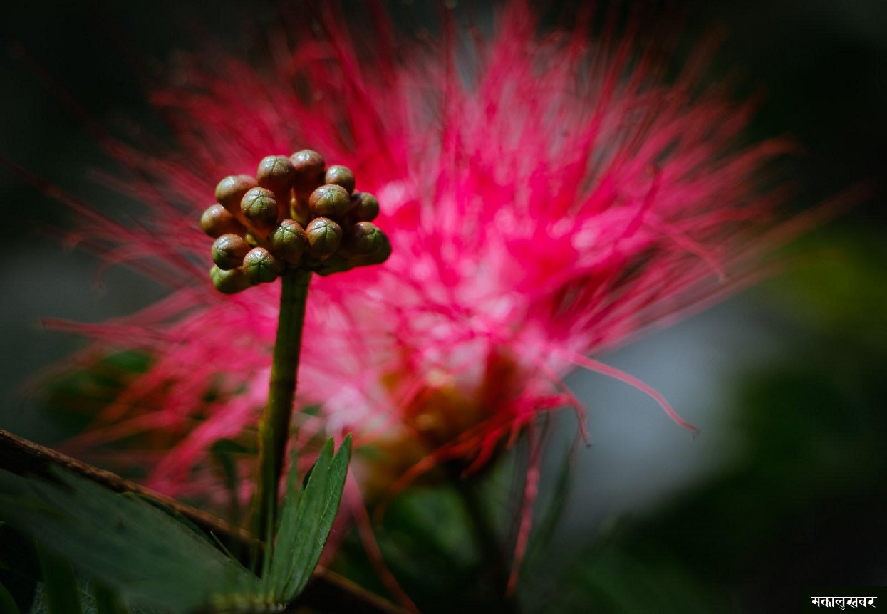 Flowers are a beautiful creation of nature [Photo Feature]
