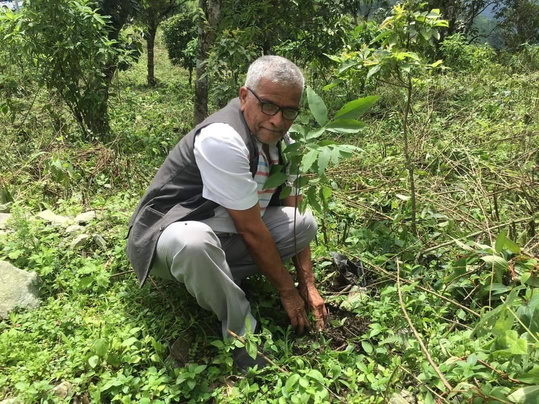 10,000 tree saplings planted in Sunsari