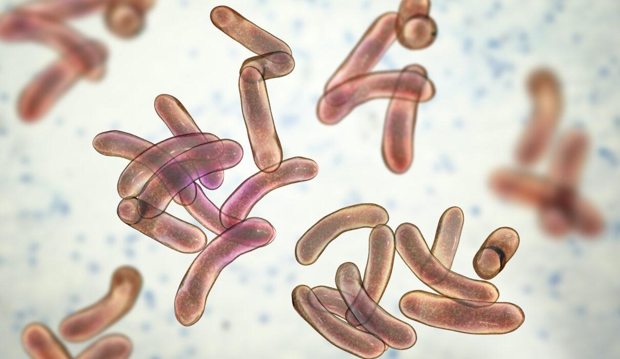 Cholera outbreak kills 30 in Nigeria's northern state of Jigawa: official