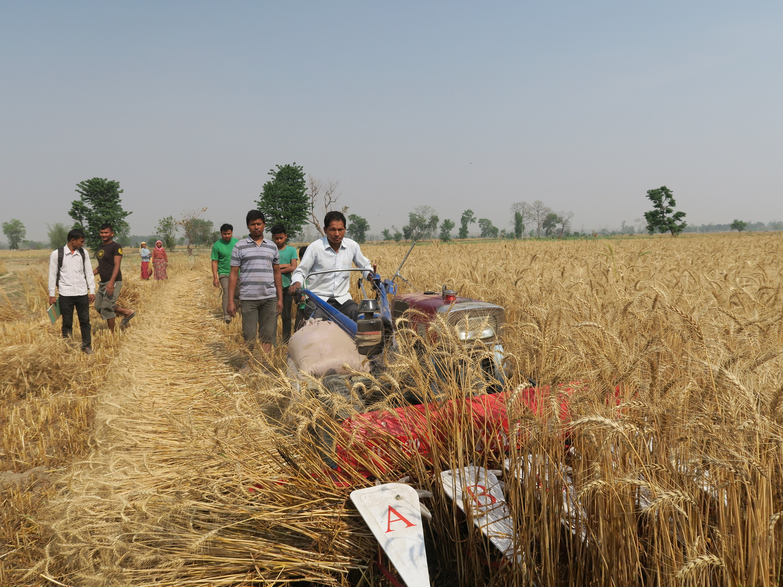 Nawalpur sees rise in winter paddy harvest